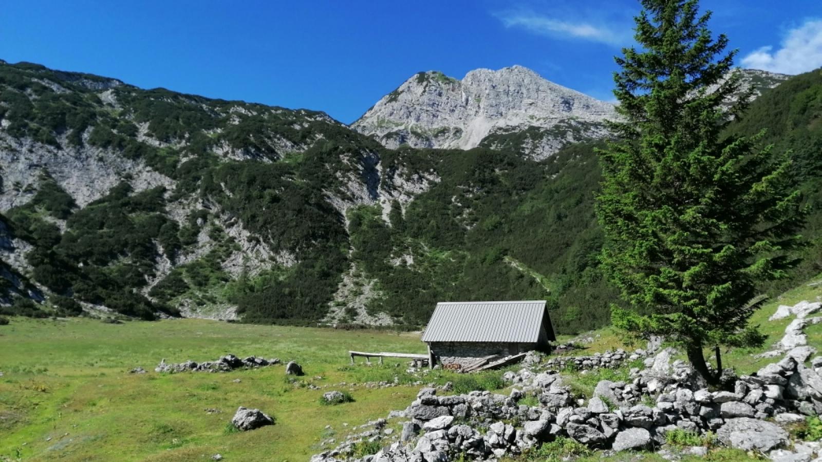 Planina Poljana pod Raskovcem
