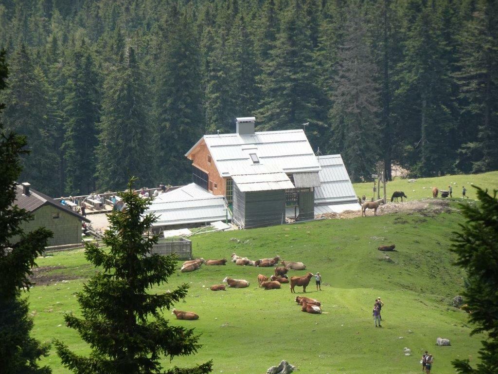 Veliki vrh v Košuti, 7.8 (4)~1